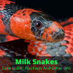 Milk Snakes (Care Guide, Fun Facts And Other Info)