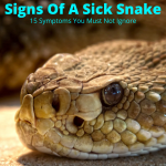 Snake showing signs of sickness