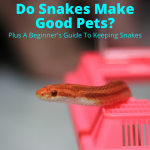 Do snakes make good pets