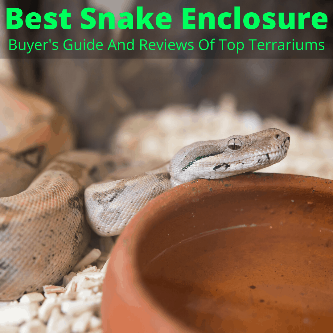 Best Snake Enclosure