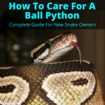 How to Care for A Ball Python