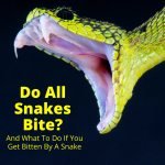 Do All Snakes Bite