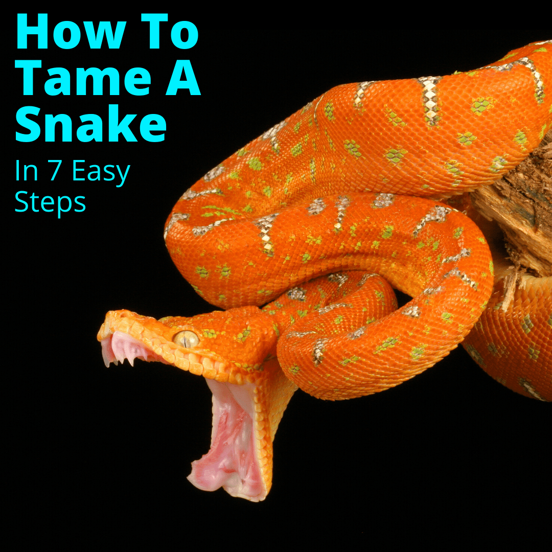 How To Tame A Snake