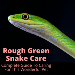 Rough Green Snake Care