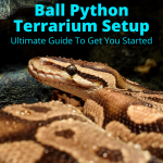 Ball Python Terrarium Setup (Ultimate Guide To Get You Started)