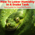 Lower Humidity In A Snake Tank