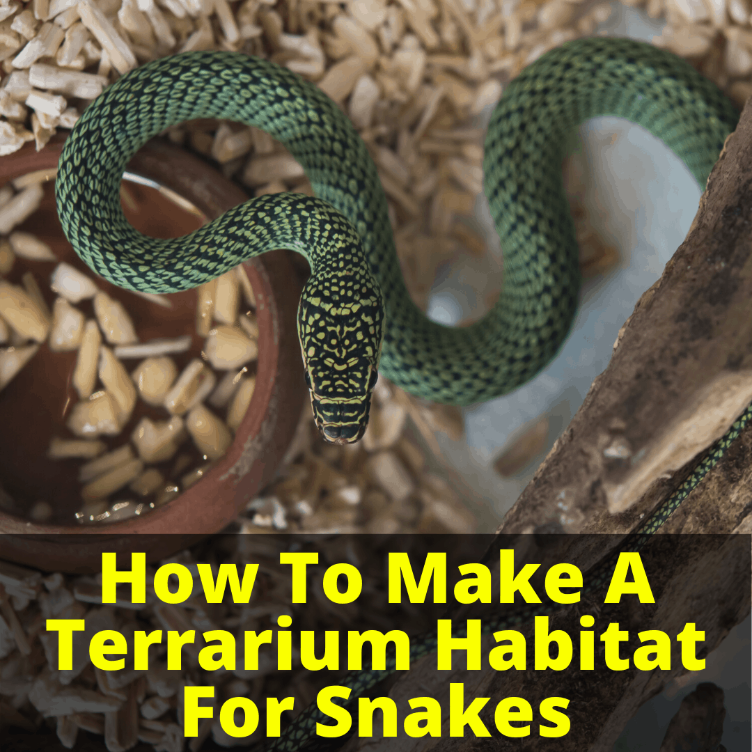 How To Make A Terrarium Habitat For Snakes