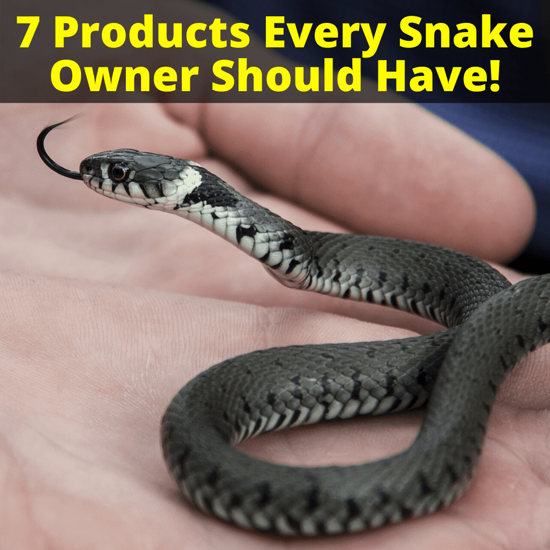 Products Every Snake Owner Should Have
