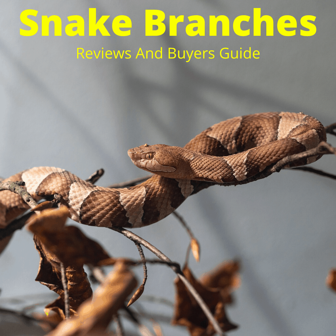 Snake branches reviewed