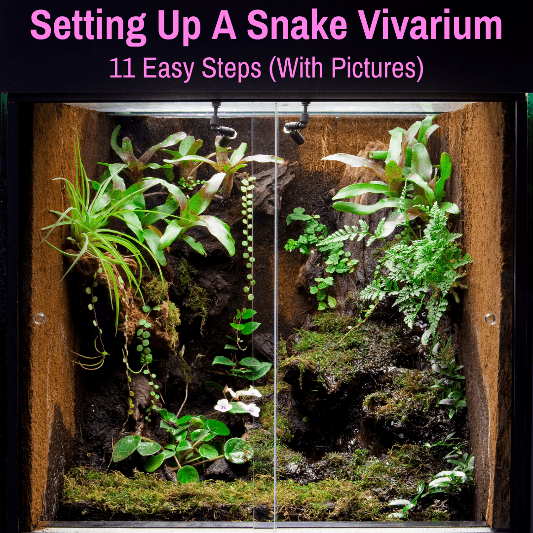 Snake vivarium