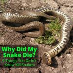 Why did my snake die