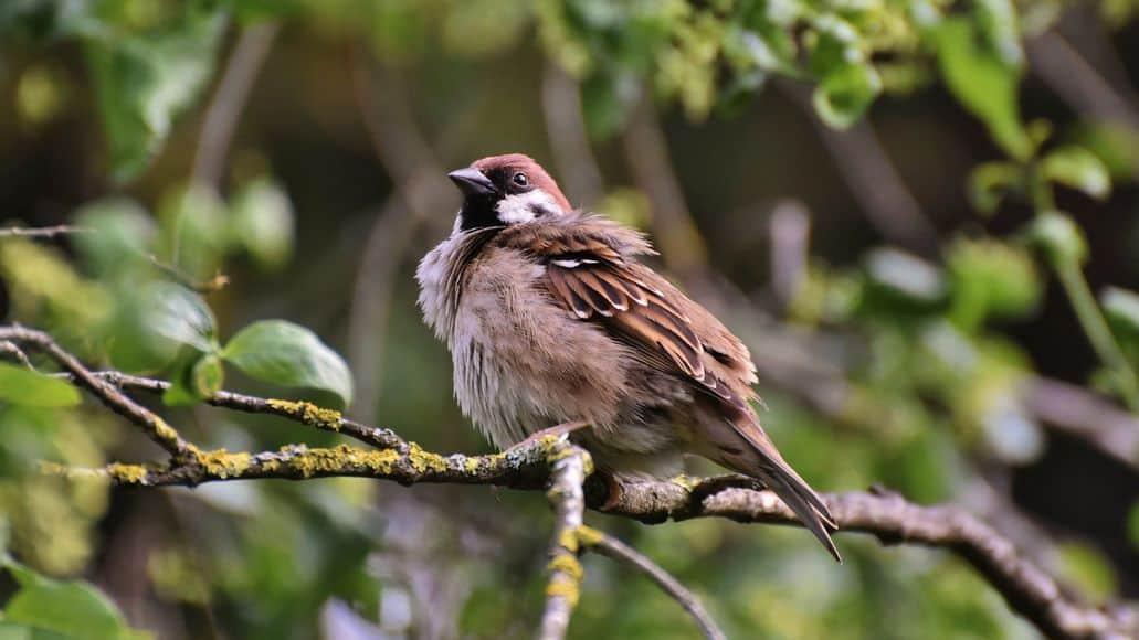 bird on snake island