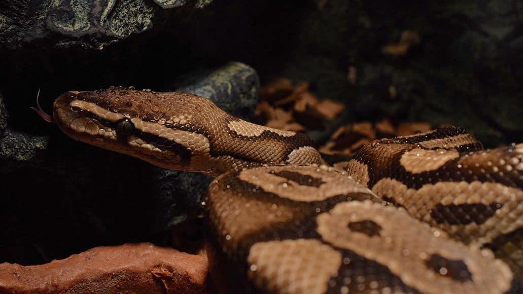 Moist snake after misting