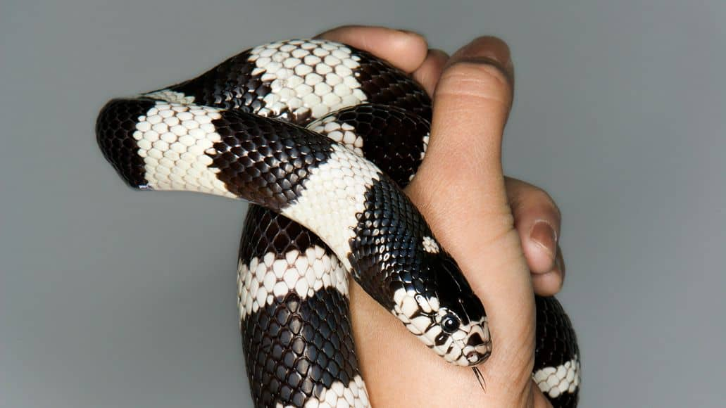 Pet snake in someones hand