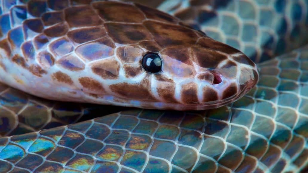 Rainbow iridescent sunbeam snake