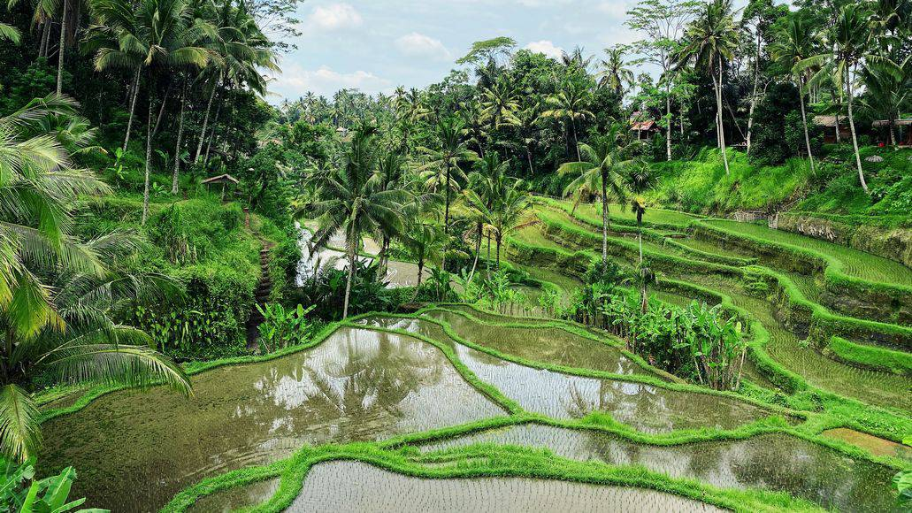 Rice paddies in Asia