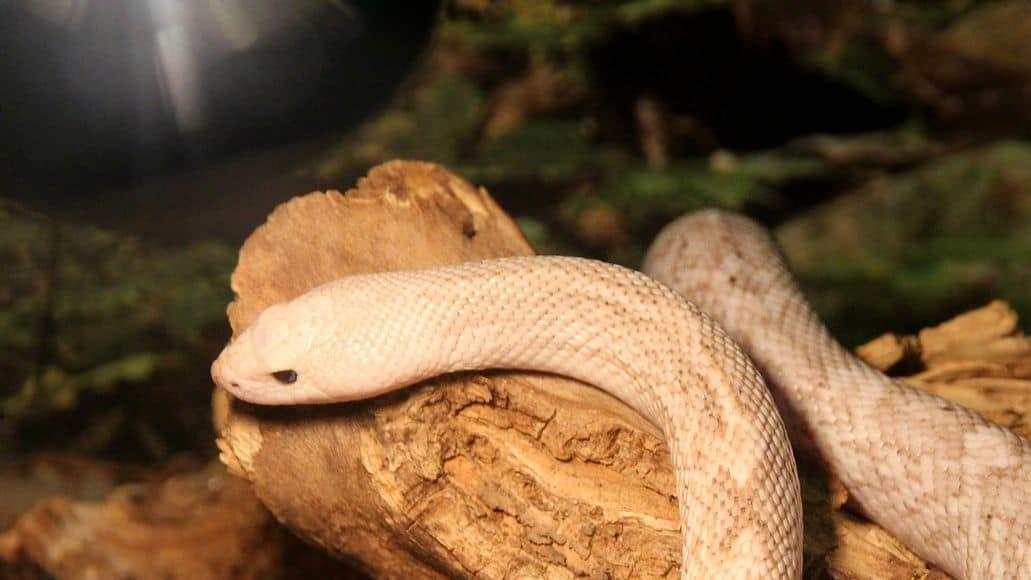 Qiet snake