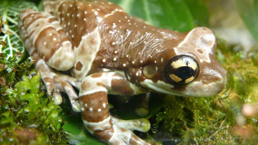 Toxic tree toad