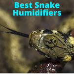 Best humidifiers for snakes