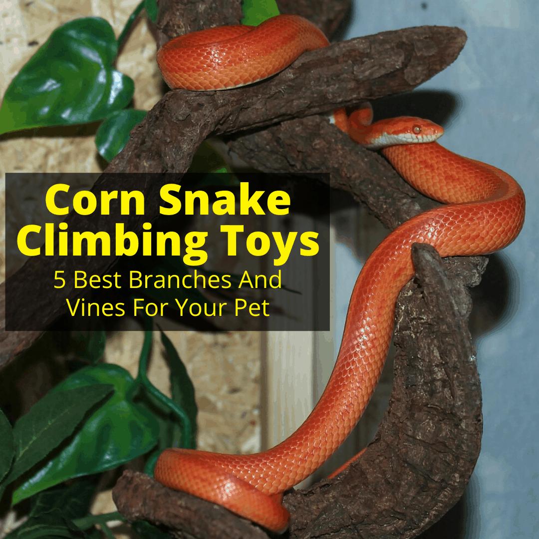Corn Snake Climbing Toys
