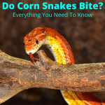 Do corn snakes bite