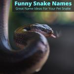 Funny snake names