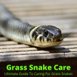 Grass snake care