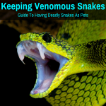 Keeping a venomous snake