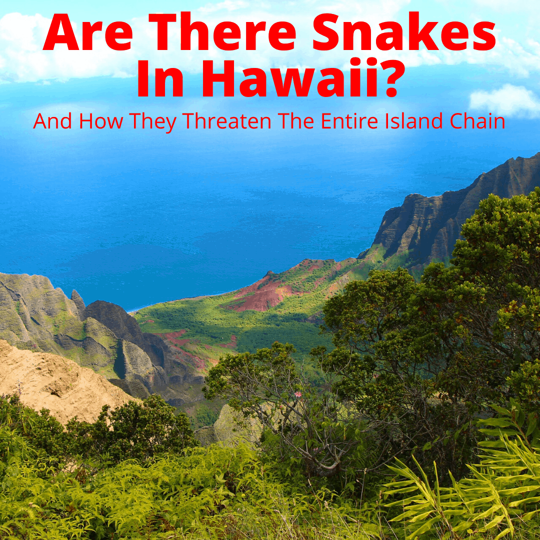 Are there snakes in Hawaii