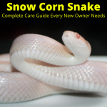 Care guide for snow corn snakes
