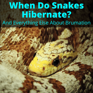 When Do Snakes Hibernate