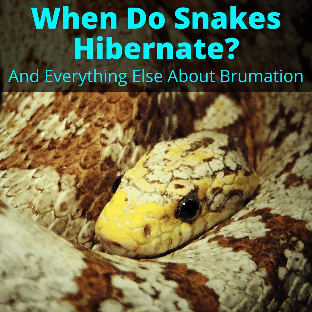 When Do Snakes Hibernate