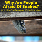 Why Are People Afraid Of Snakes