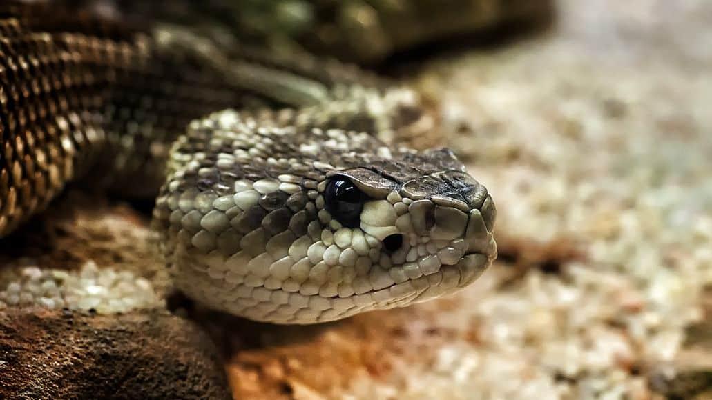Scary dangerous snake