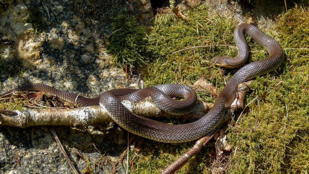Frightening snake