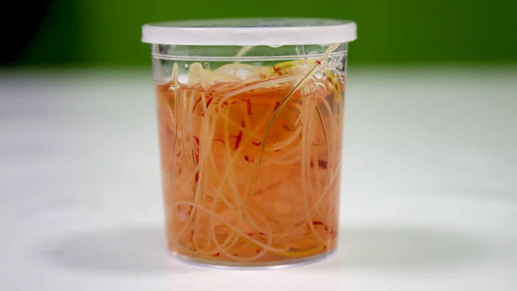 Intestinal worms