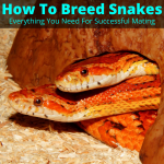 How to breed snakes