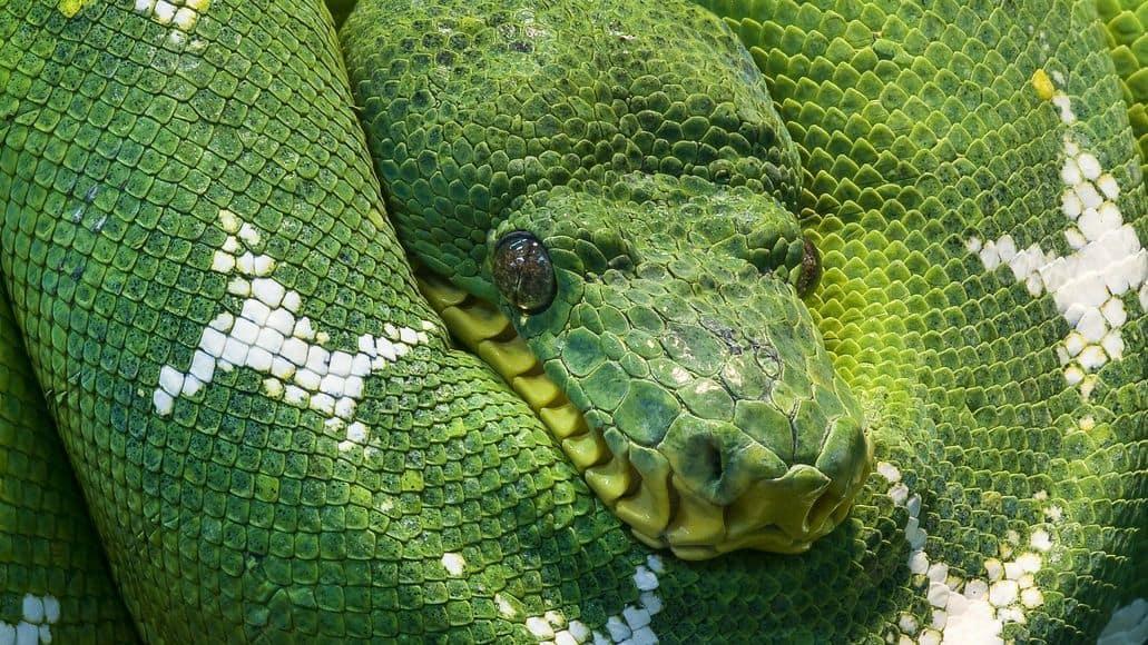 Cold sick snake