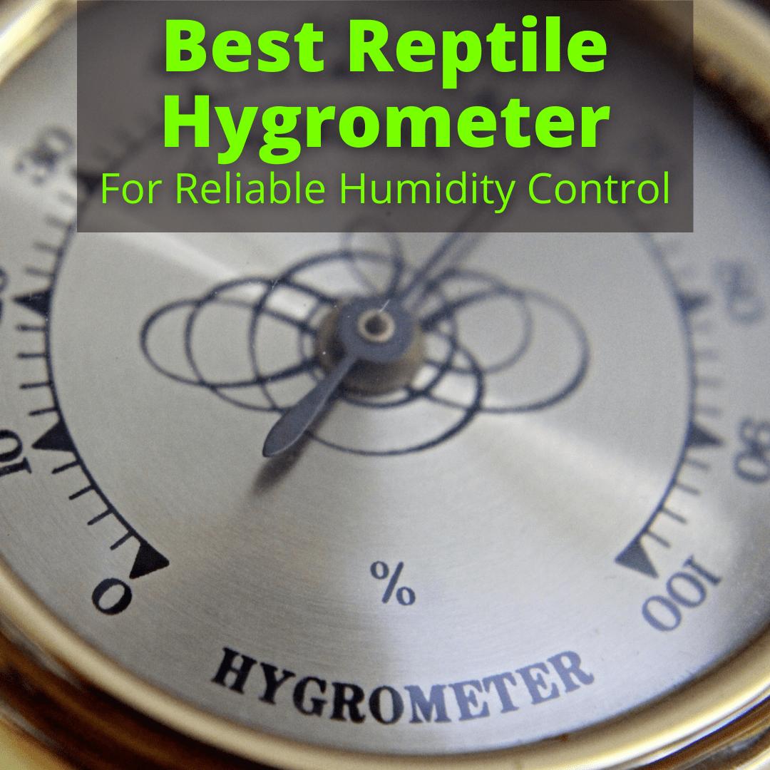 Best Reptile Hygrometer