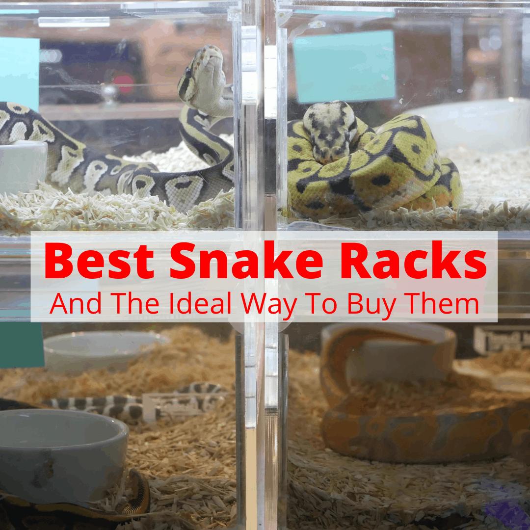 Best Snake Racks