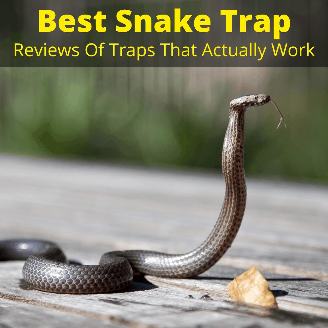 Best Snake Trap