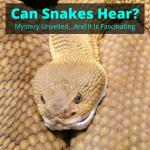 Can Snakes Hear