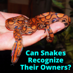 Can Snakes Recognize Their Owners