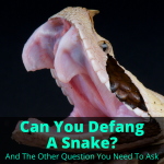 Can You Defang A Snake