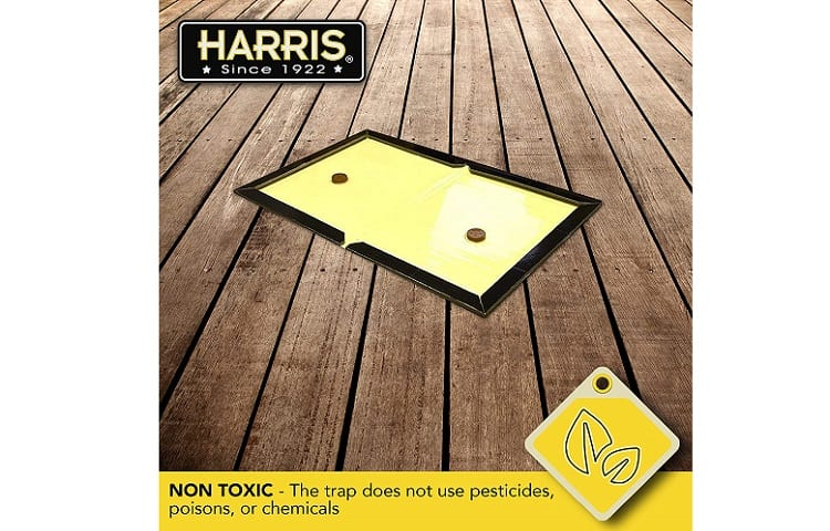 Harris Supersized Snake Glue Trap Review