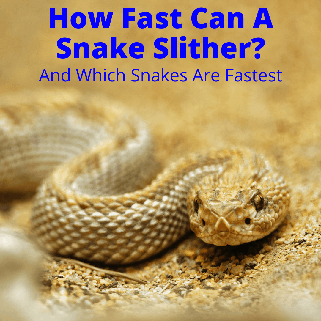 How Fast Can A Snake Slither