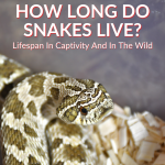 How Long Do Snakes Live
