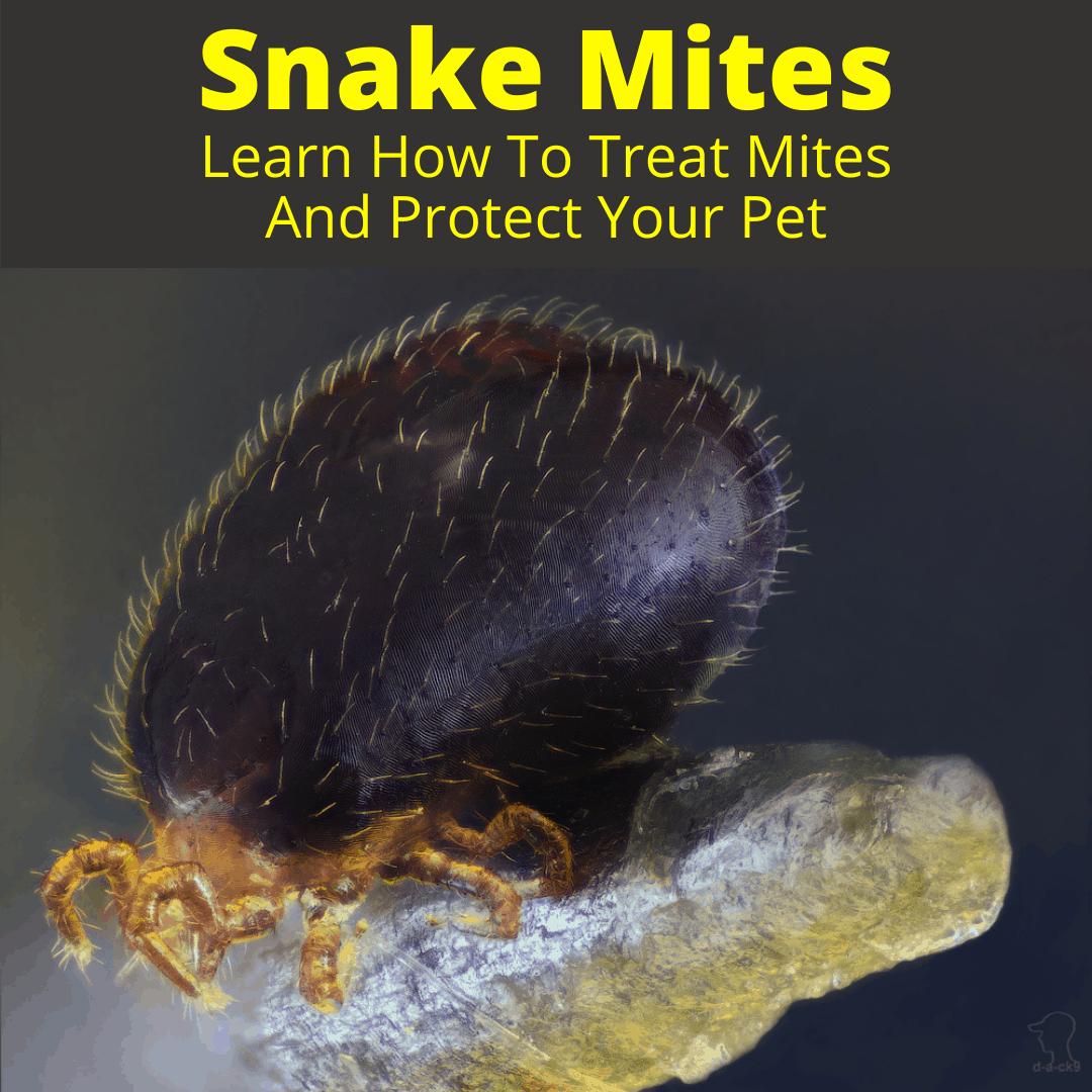 Snake Mites