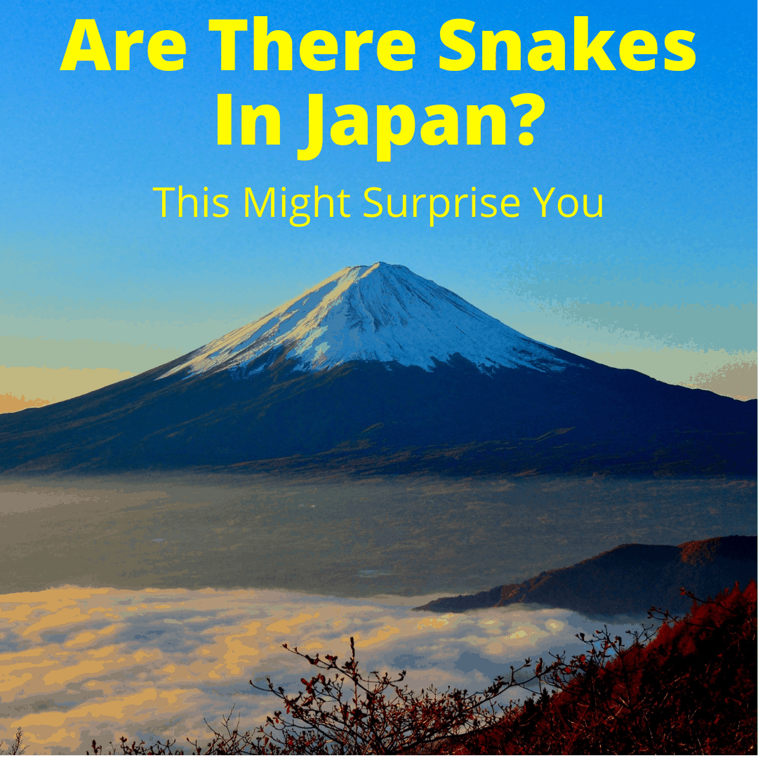 Are There Snakes In Japan