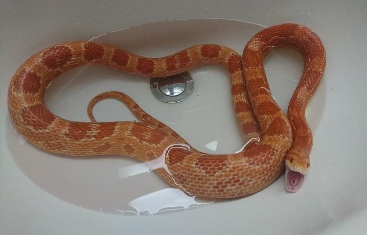 snake in bathtub